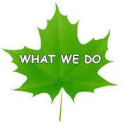 What We Do Leaf