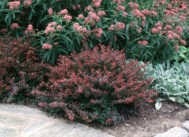 Shrubs dooley landscape designs albuquerque for Landscaping shrubs