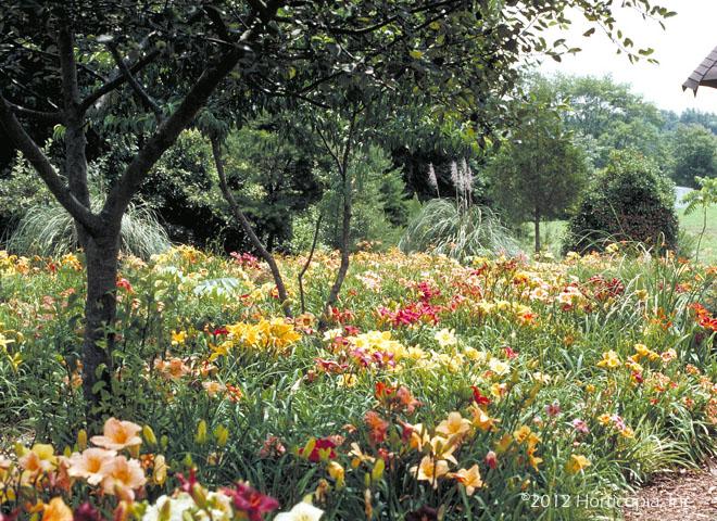 Perennials Dooley Landscape Designs Albuquerque