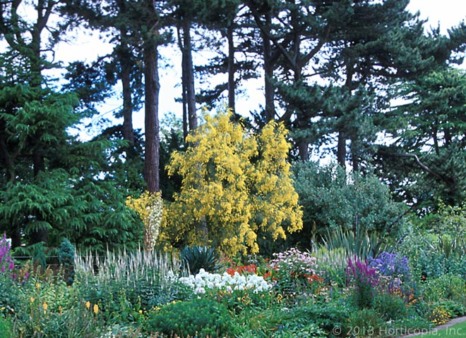 Spanish%20,%20Genista House Plant That Likes Humidity on plants that like standing water, plants that like cold weather, plants that like sunlight, plants that like fire, plants that like moisture, plants that like low temperature, plants that like heat,